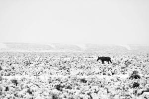 Grand Tetons Moose 5-10.11 056ps