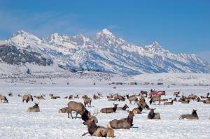 National Elk PreserveJA