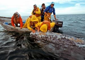 """""""Kiss the Whale"""" Baja, CA"""