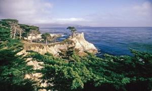 Lone Cypress Tree Monterey, CA